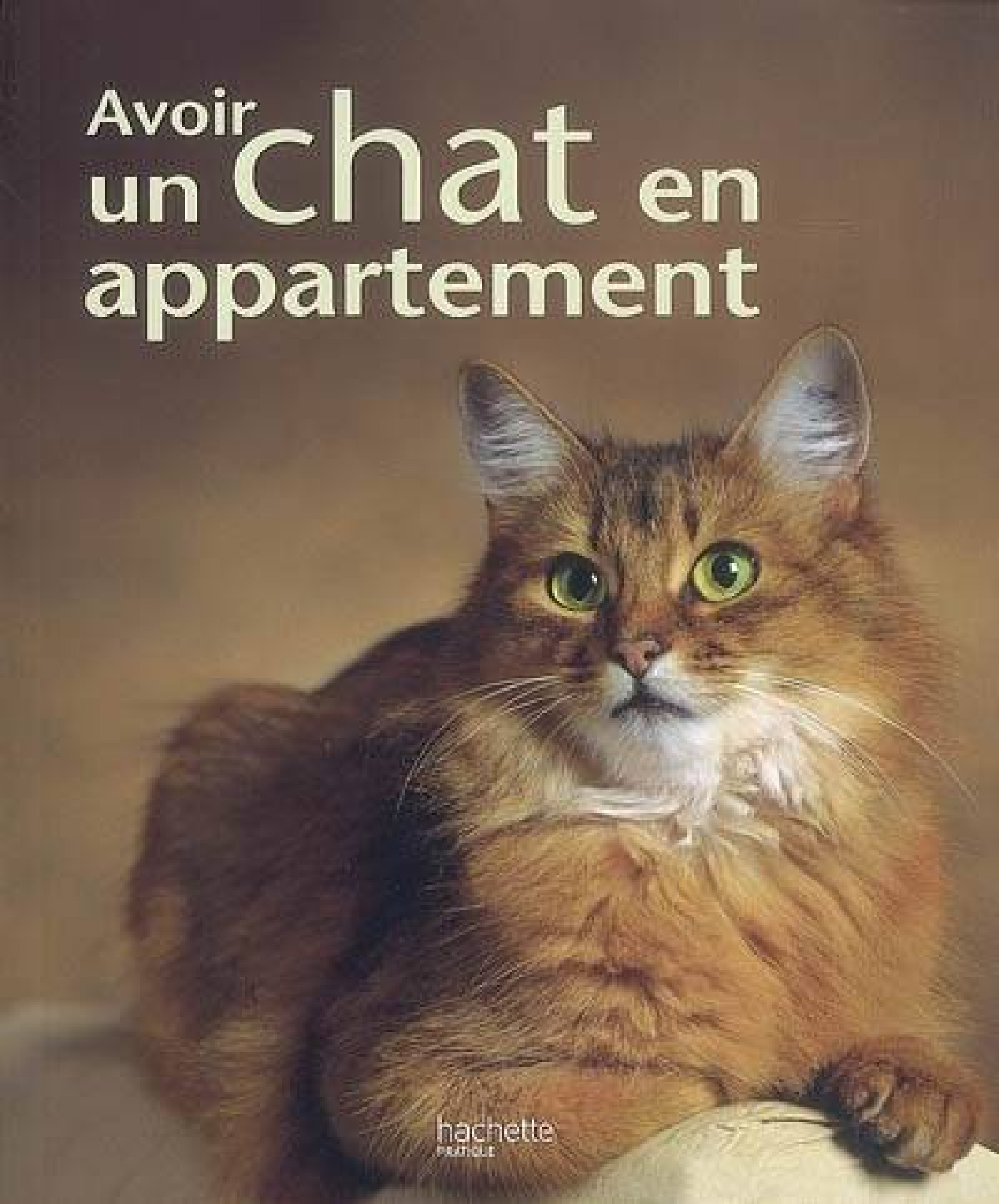 Avoir un chat en appartement - Anihomesitting.fr